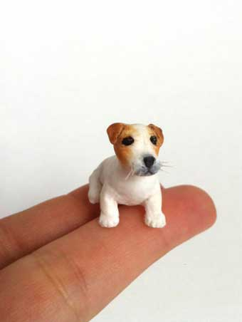 jack russell terrier mini Acondroplacia enanismo